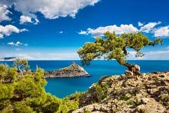 Árvore e mar Imagens de Stock