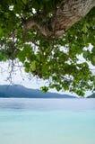 Árvore e mar Foto de Stock