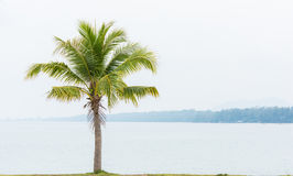 Árvore e mar de coco Foto de Stock