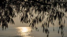 Árvore e mar no nascer do sol imagens de stock