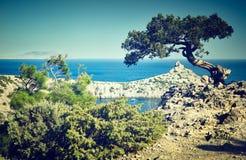 Árvore e mar no por do sol Paisagem de Crimeia Imagens de Stock