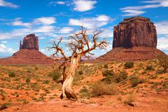Árvore e montículos no vale do monumento Fotos de Stock