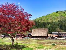 Árvore e montanha Imagem de Stock Royalty Free