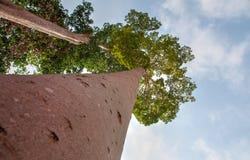 Árvore e natureza Imagens de Stock