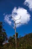 Árvore e nuvem Fotos de Stock