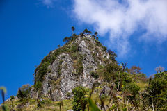 Árvore e nuvem Foto de Stock Royalty Free