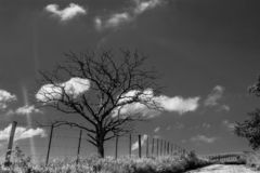 Árvore e a nuvem fotos de stock royalty free