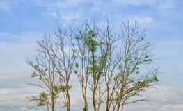 Árvore e nuvens imagem de stock
