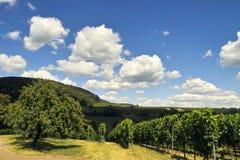 Árvore e nuvens de Apple Imagem de Stock Royalty Free