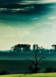 Árvore e nuvens escuras Imagens de Stock