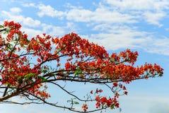 A árvore e o céu Foto de Stock Royalty Free
