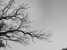 A árvore e o céu secos Foto de Stock
