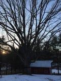A árvore e o celeiro grandes no por do sol em um dia de inverno Fotos de Stock Royalty Free