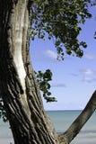 Árvore e o lago Foto de Stock