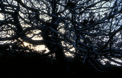 A árvore e o sol Imagem de Stock