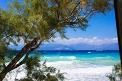 árvore e oceano da curvatura foto de stock