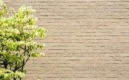 Árvore e parede Fotografia de Stock Royalty Free