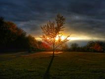Árvore e paz Fotografia de Stock Royalty Free