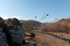 Árvore e pedra macro em Armênia Imagem de Stock