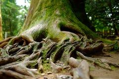 Árvore e ponte Fotografia de Stock