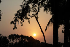 Árvore e por do sol Fotografia de Stock
