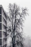 Árvore e prédio de apartamentos da névoa Fotos de Stock Royalty Free