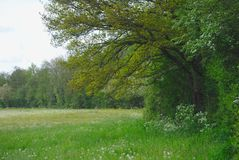 Árvore e prado na mola em Auvergne fotos de stock