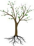 Árvore e raizes Imagens de Stock