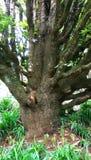 Árvore e ramo Imagens de Stock Royalty Free