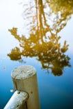 Árvore e a reflexão Foto de Stock Royalty Free