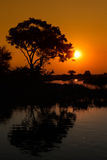 Árvore e reflexão Imagem de Stock Royalty Free