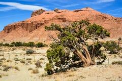 Árvore e rocha vermelha Fotografia de Stock