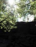 Árvore e sol fotos de stock