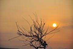 Árvore e sol Imagens de Stock