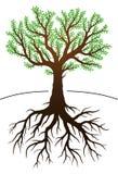 Árvore e suas raizes Fotos de Stock Royalty Free