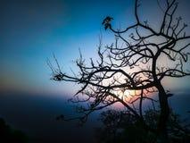 Árvore e um céu da noite do fundo do por do sol com um esquema de cor bonito e uso do tom perfeito um melhor como um fundo imagens de stock royalty free