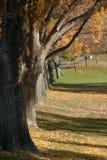 Árvore e um parque imagem de stock royalty free