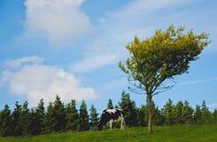 Árvore e uma vaca Fotografia de Stock Royalty Free