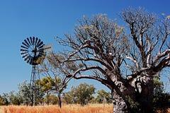 Árvore e vento-roda de Boab fotografia de stock royalty free