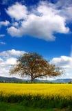 Árvore e violação Fotografia de Stock