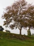 Árvore elevada Imagem de Stock Royalty Free