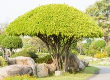 Árvore elevada Imagens de Stock Royalty Free
