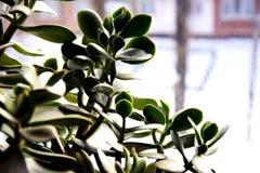 A árvore em antecipação à mola Fotografia de Stock