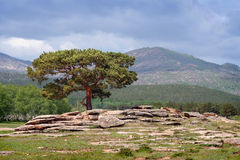Árvore em Bayanaul foto de stock royalty free