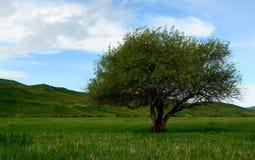 Árvore em estepes de Quirguistão Fotos de Stock Royalty Free