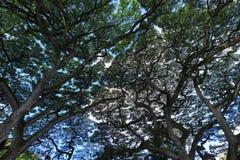 Árvore em Havaí Imagem de Stock Royalty Free