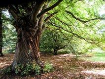 Árvore em jardins de Kew imagem de stock