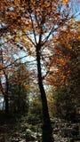 Árvore em montanhas Carpathian fotografia de stock