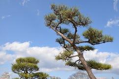 A árvore em torno do castelo de Himeji Foto de Stock Royalty Free