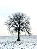 Árvore em um campo 1 do inverno Imagens de Stock